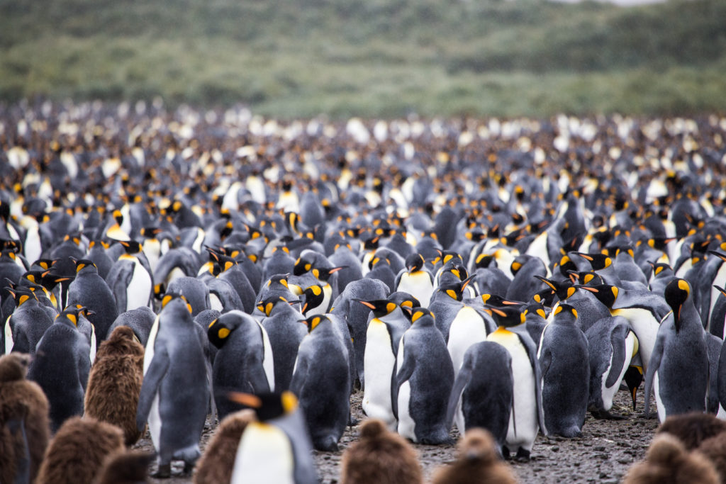 penguins on women only tour of Antarctica